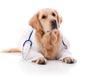 dog labcoat